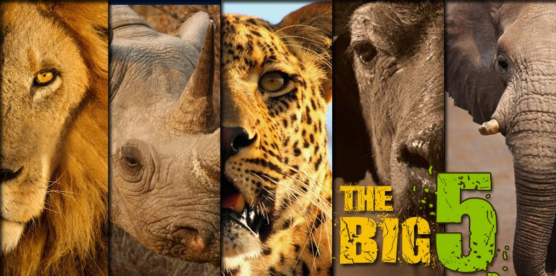 Big 5 Animals in South Africa