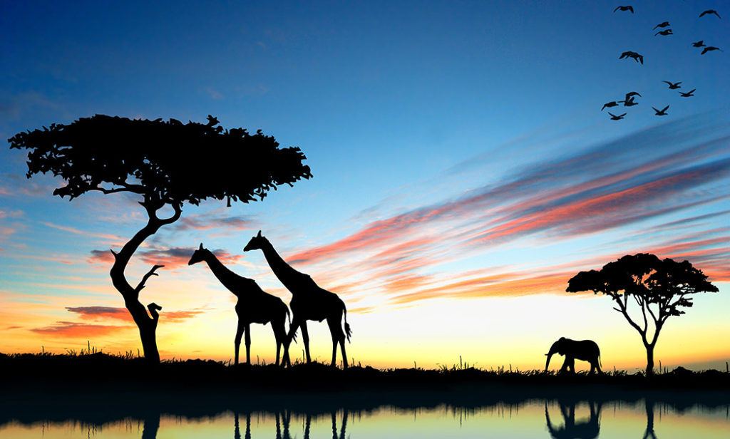 Safaris South Africa